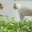 野良猫と飼い猫
