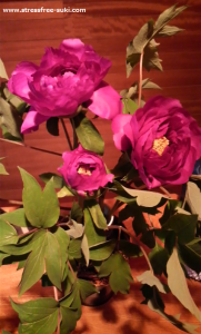 牡丹の花1