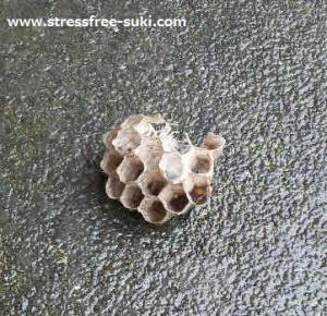 蜂の巣、取る
