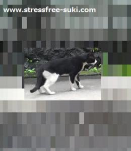 自宅の駐車場に野良猫1