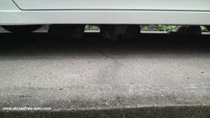 自宅の駐車場に野良猫3