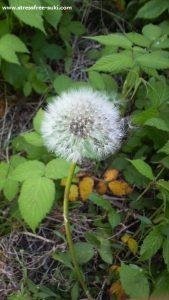 庭に植えた覚えない春の植物2